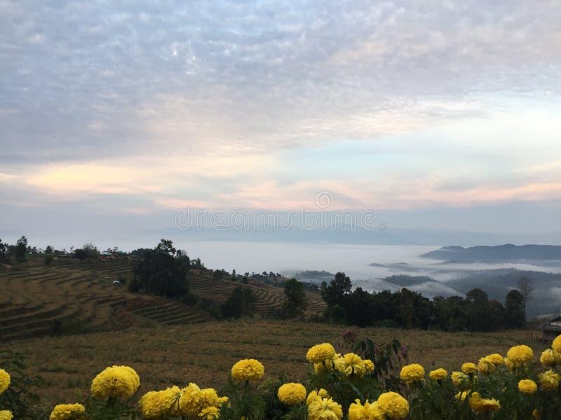 Skog i den norr solnedgången för Thailand nuturegräsplan @ arkivfoton