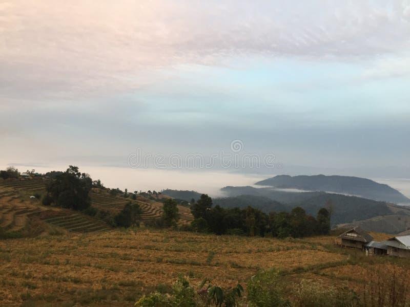 Skog i den norr solnedgången för Thailand nuturegräsplan @ royaltyfri foto