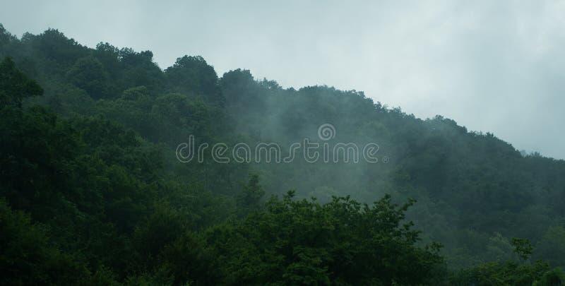 Skog i dimma royaltyfri foto