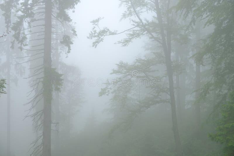 Skog i dimman i Dragobrat Urkaine royaltyfri bild