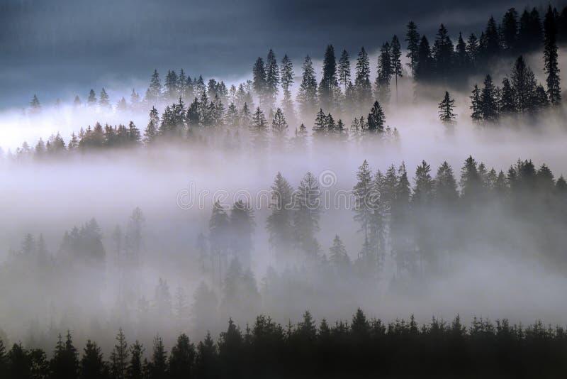 Skog i dimmig morgon royaltyfri foto