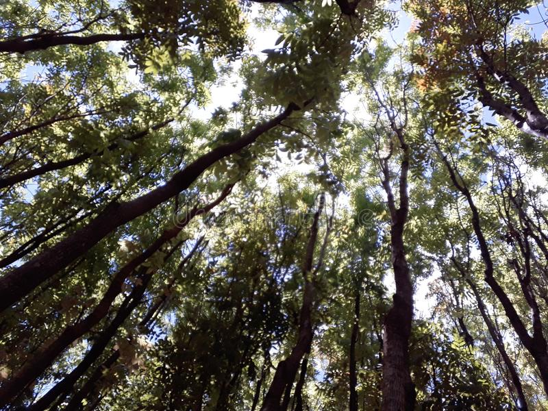 Skog i Filippinerna royaltyfria foton