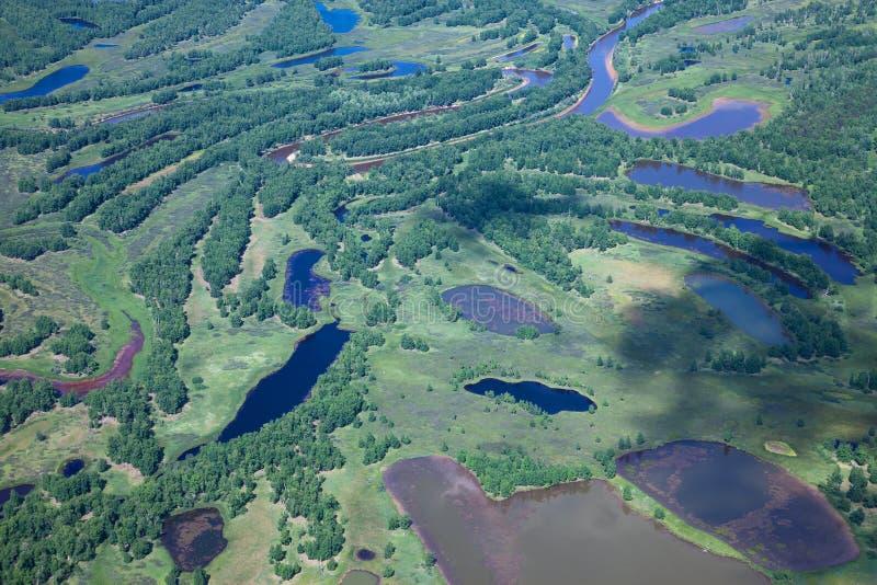 Skog i floden royaltyfria bilder