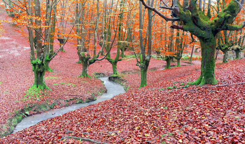 Skog i höst med en ström royaltyfri fotografi