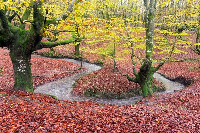 Skog i höst med strömmen royaltyfria bilder