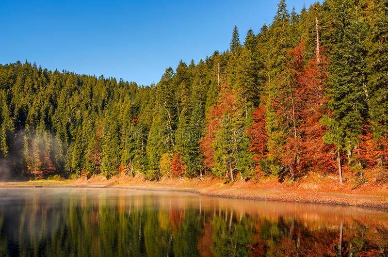 Skog i höstmorgonmist på sjön arkivfoton