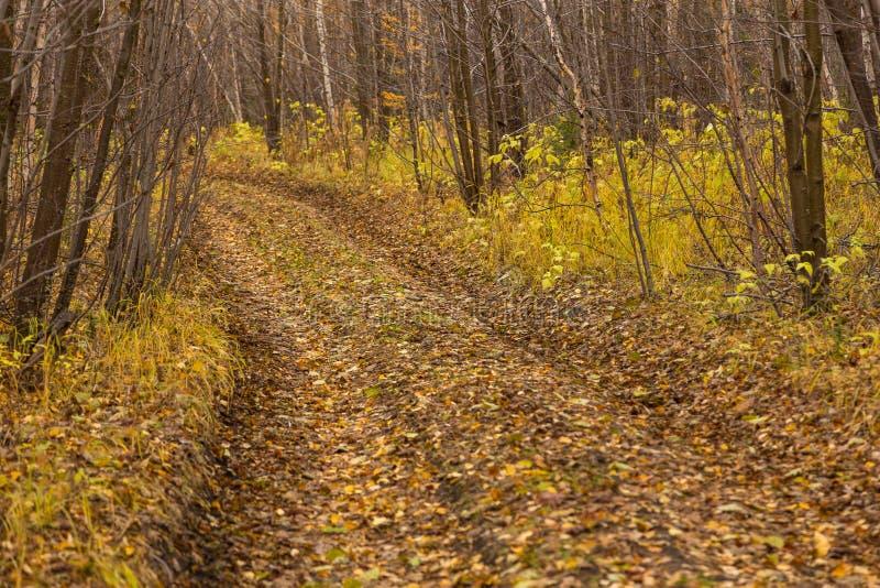 Skog i h?stf?rger p? den Kamchatka halv?n, Ryssland arkivbilder