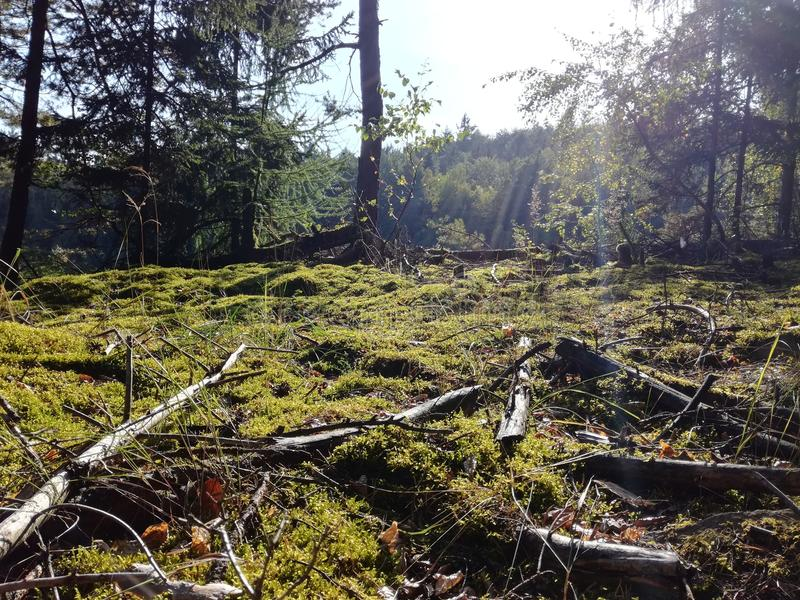 Skog i middagsolsken royaltyfri foto