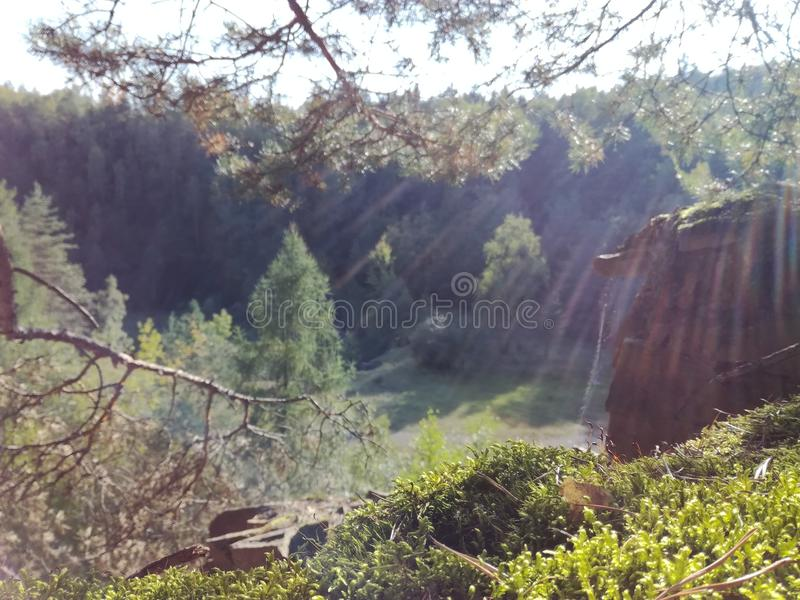 Skog i middagsolsken royaltyfri fotografi