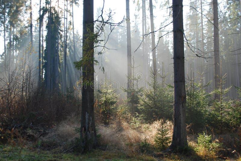 Skog i morgonen royaltyfri bild