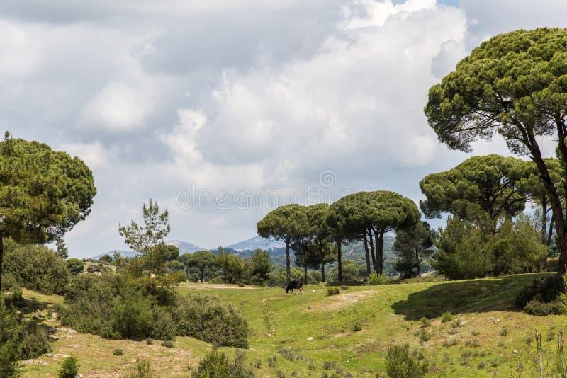 Skog i muglaen, kalkon royaltyfri foto