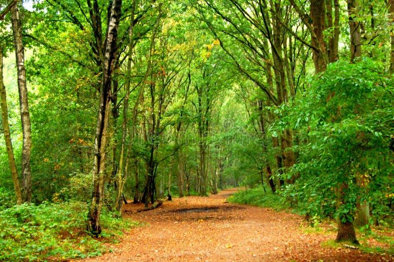 Skog i Nederländerna royaltyfria bilder