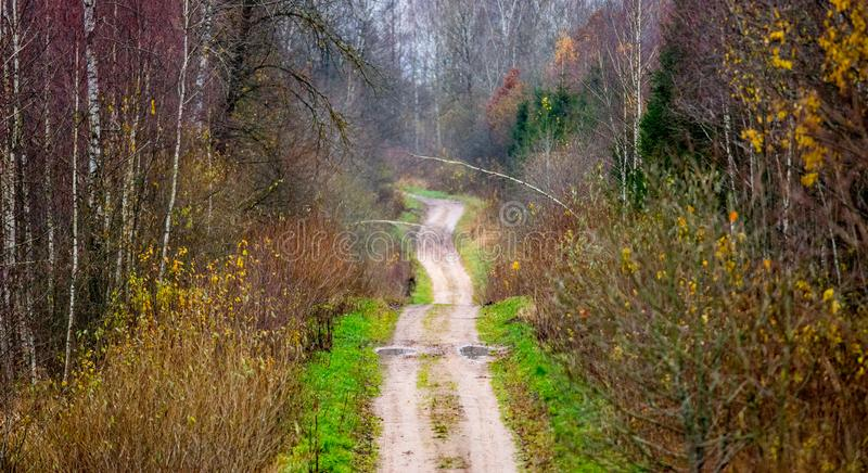 Skog i nedgång arkivbilder