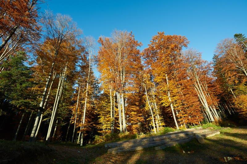Skog i nedgångdag fotografering för bildbyråer