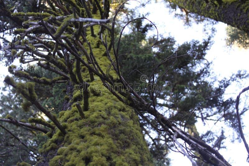 Skog i Oregon royaltyfria foton