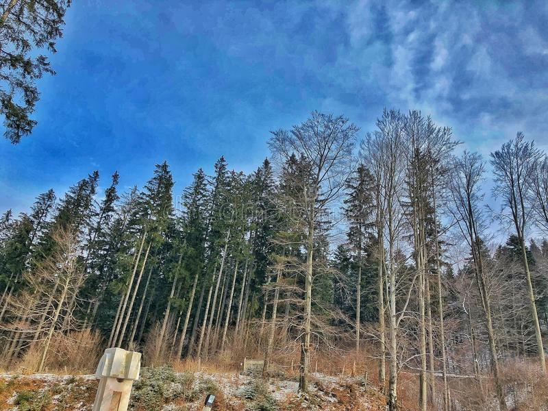 Skog i Rumänien arkivbilder