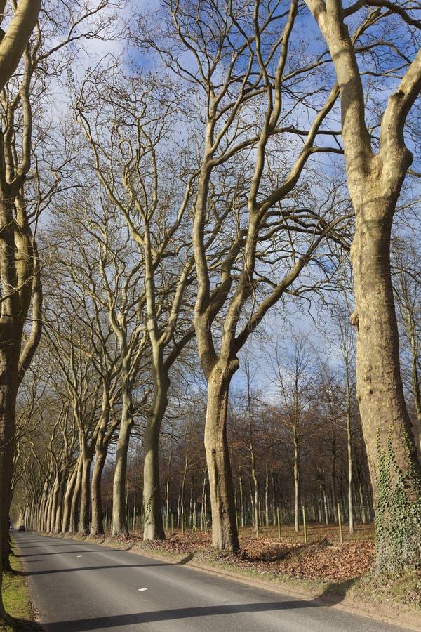 Skog i slotten av vaux-le-vicomte arkivfoto