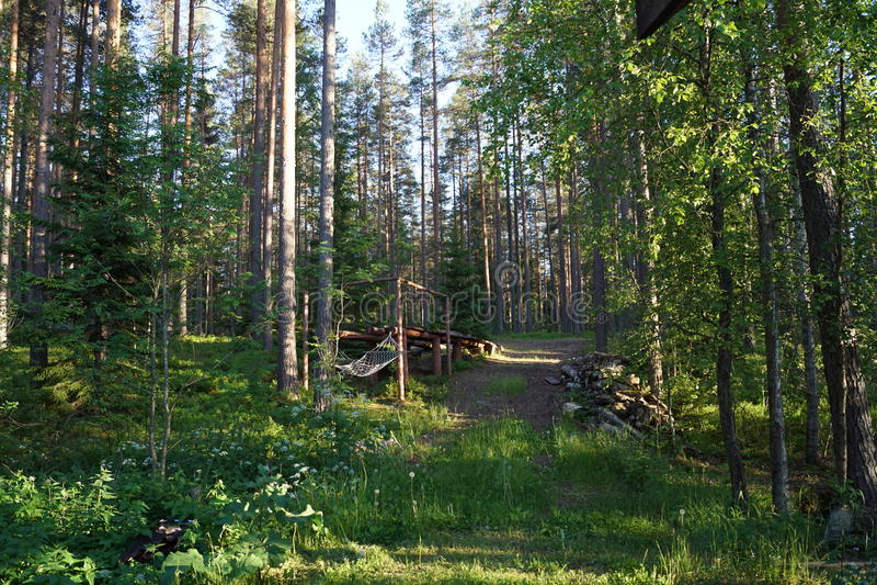 Skog i solen arkivfoton
