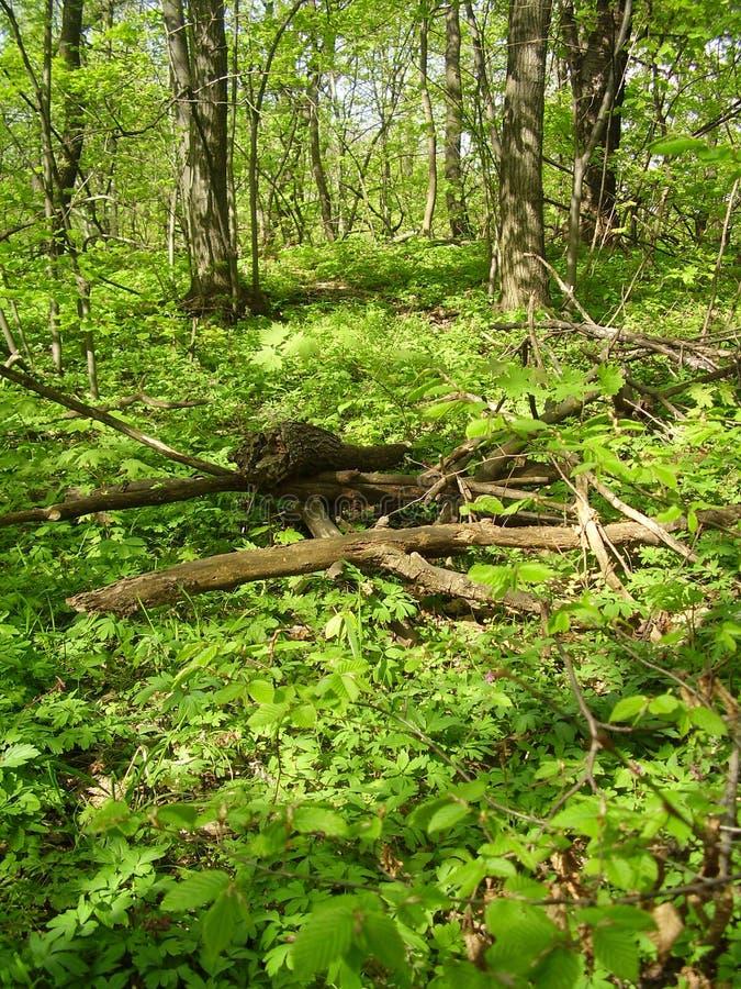 Skog i springtime royaltyfri fotografi