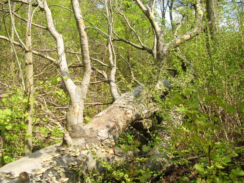 Skog i springtime royaltyfria bilder