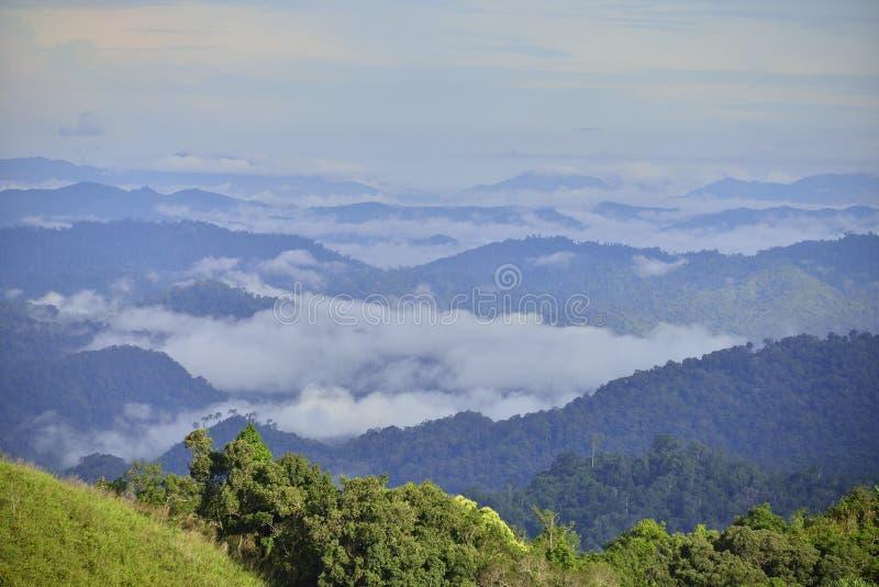 Skog i västra av Thailand arkivfoton
