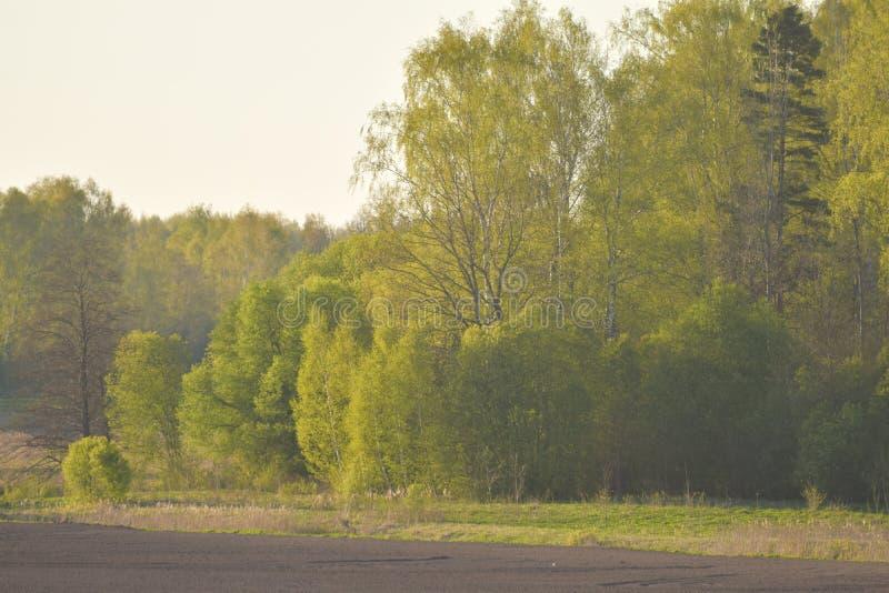 Skog i våren royaltyfri fotografi
