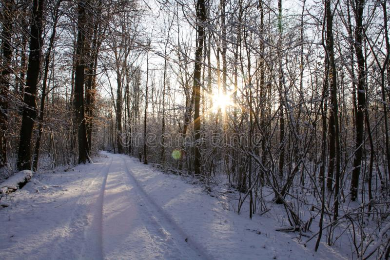 Skog i vinter royaltyfria bilder