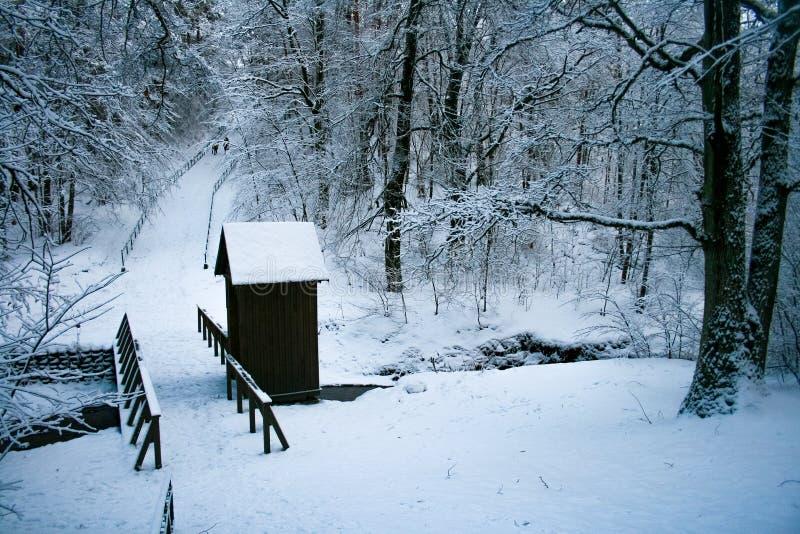 Skog i vinter med träbron och kabinen royaltyfri fotografi