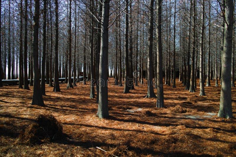 Skog i vintern arkivfoto