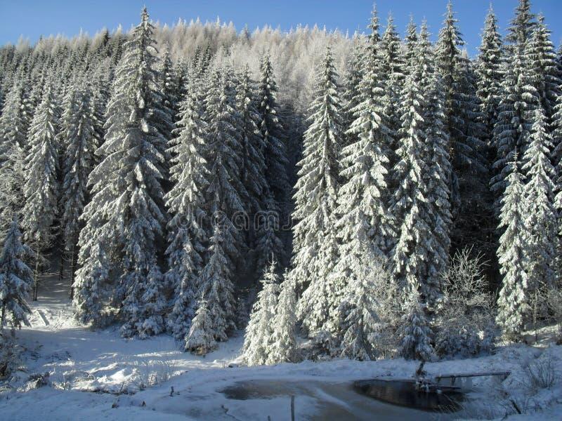 Skog i vit royaltyfri foto