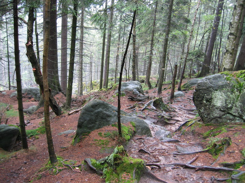 skog ii royaltyfria foton