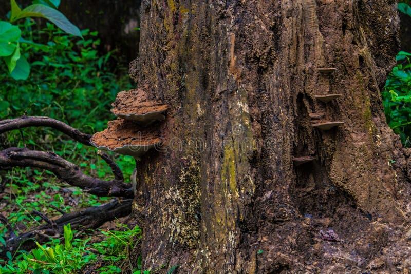 skog isolerad champinjonwhite arkivbilder