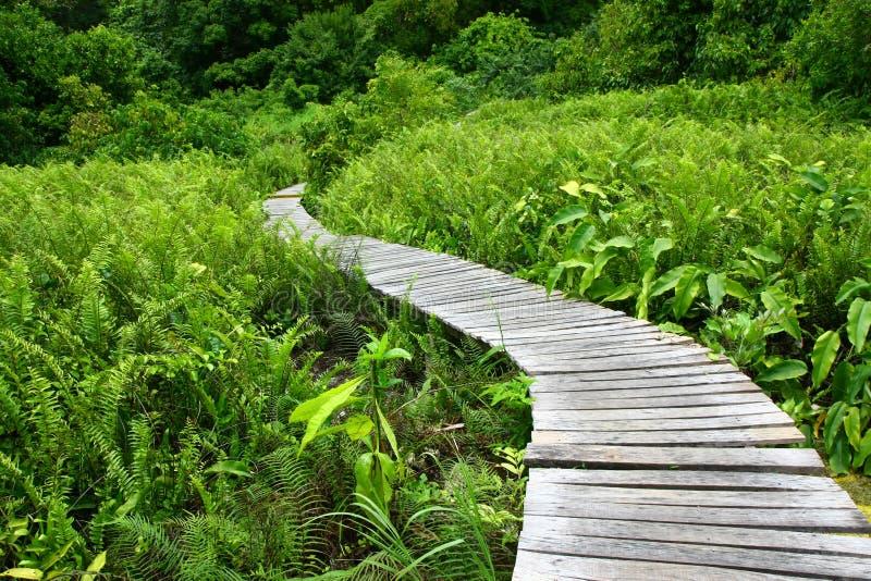 skog långt royaltyfria foton