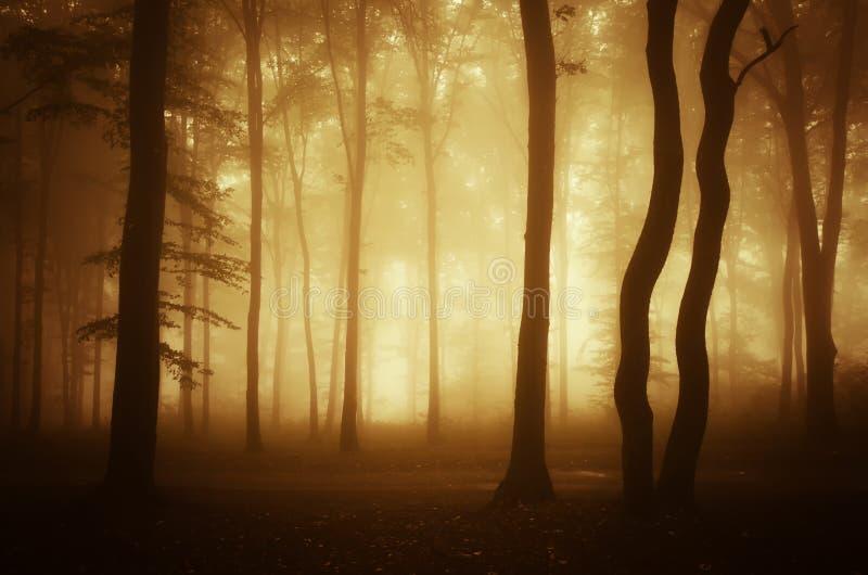 Skog med dimma på soluppgång royaltyfria bilder