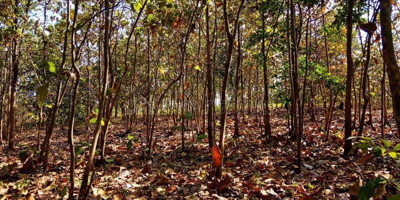 Skog med fallande sidor royaltyfri foto