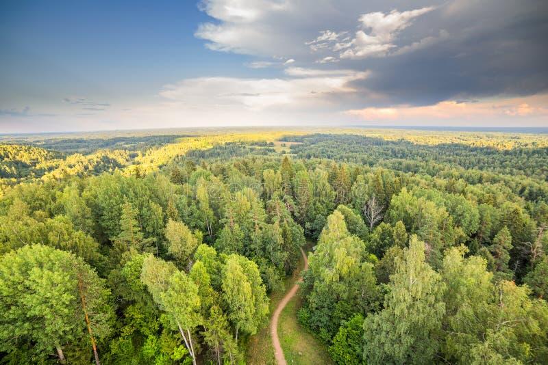 Skog med flyg- dramatisk himmel för vägsolnedgång royaltyfria bilder