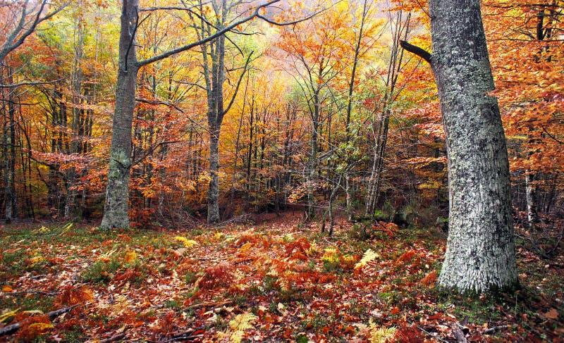 Skog med höstliga färger royaltyfri fotografi