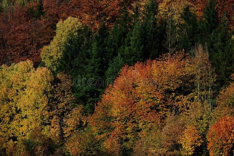 skog med höstTjeckien royaltyfria foton