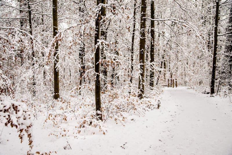 Skog med insnöad djup vinter i Tyskland royaltyfria foton