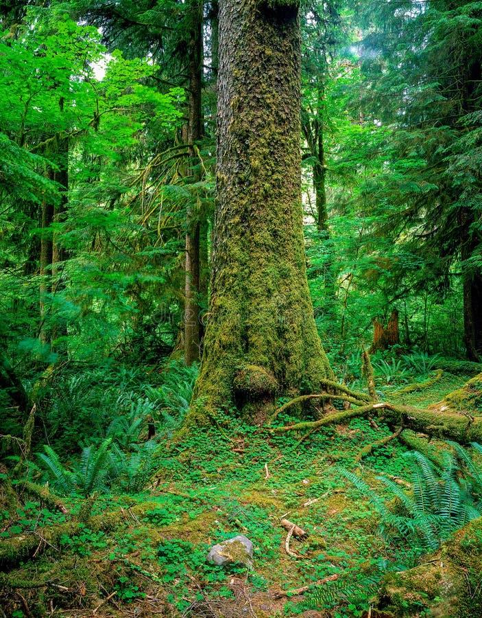 Skog med ormbunken royaltyfri bild