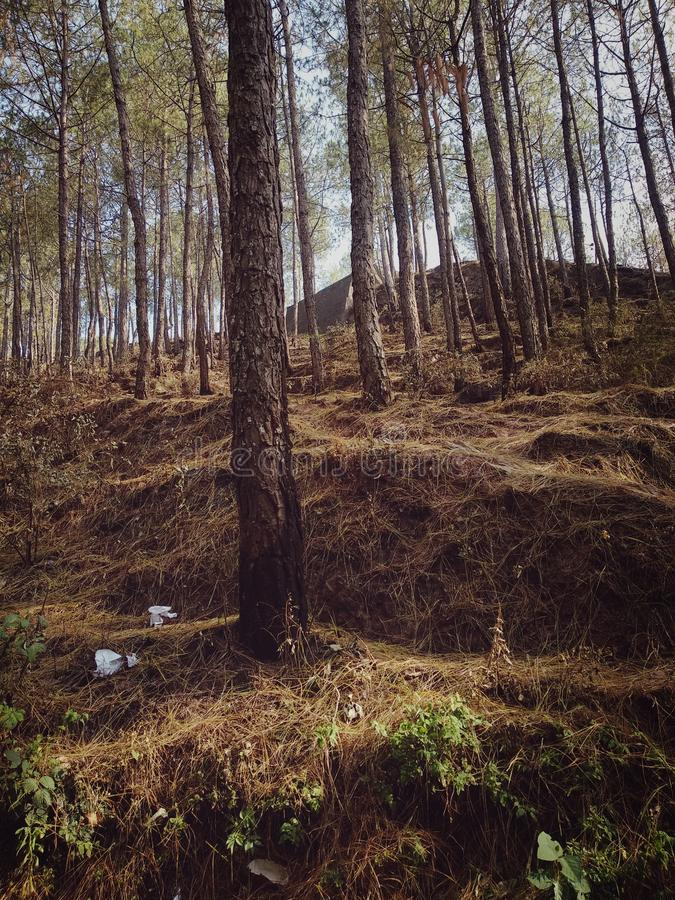 Skog med stora tr?d arkivbild