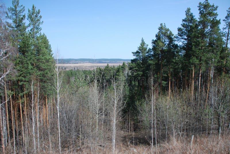 skog med vintergröna träd, sikt uppifrån av berget arkivfoton