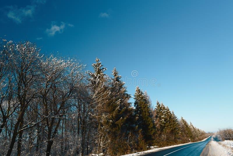 Skog nära asfaltvägen som täckas med snö nära skogen på en solig vinterdag mot den blåa himlen arkivbild