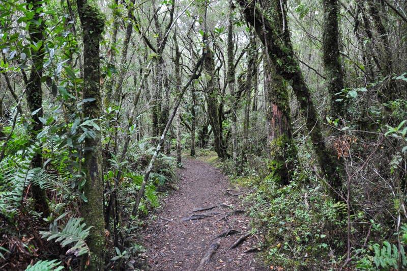 Skog nära Petrohue, i Chile fotografering för bildbyråer