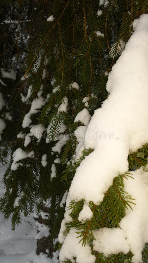 Skog natur Sverige arkivbild