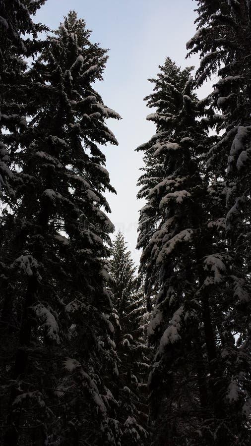 Skog natur Sverige royaltyfria bilder