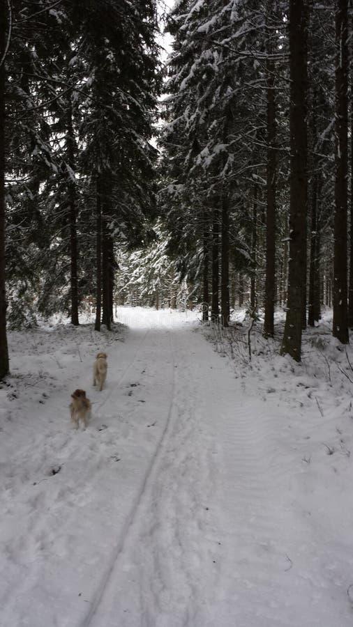 Skog natur Zweden stock foto's