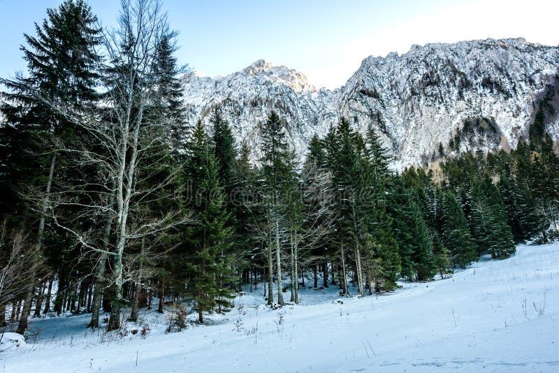 Skog och djupfrysta träd med berg som täckas i snö royaltyfria foton