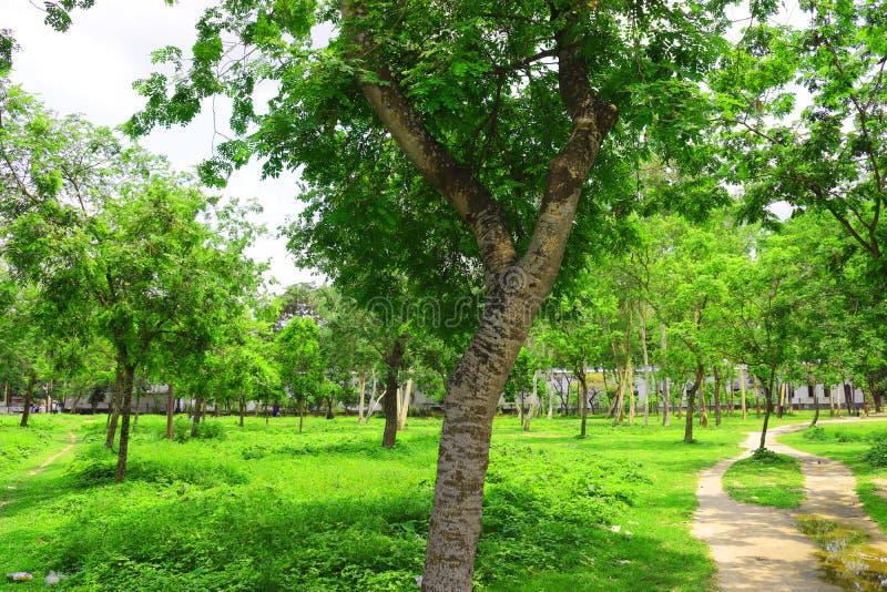 Skog och gr?nt djungeltr?d H?rligt naturligt landskap Djupa tropiska djungler H?sten landskap Nedg?ngbakgrund Skogsolljus f fotografering för bildbyråer