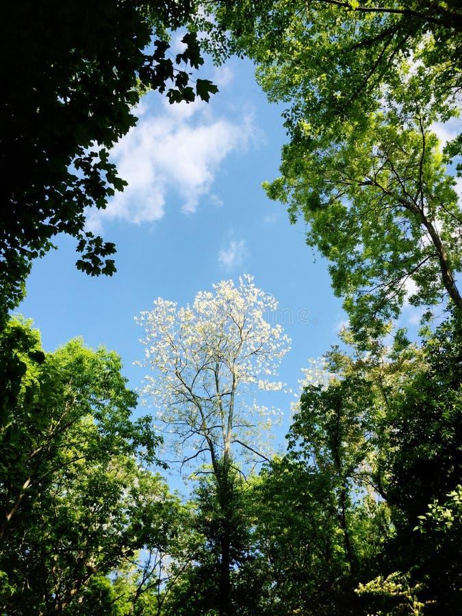 Skog och himmel i vår royaltyfri fotografi